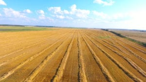 Barley swath rows in Melfort, Saskatchewan, Canada