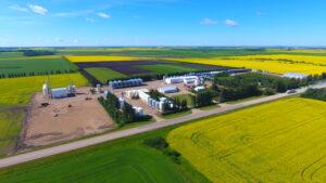 Trawin Seeds Farm Yard 2020